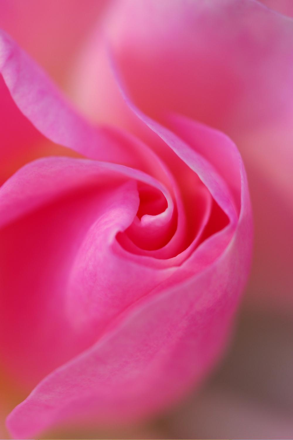 rosewater_moisturizer