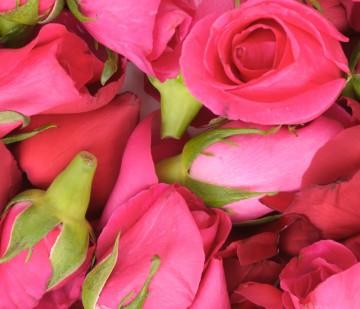 victorian_heart_rosebud