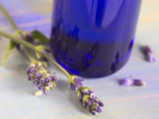 Lavender organic essential oil use for food or aromatherapy